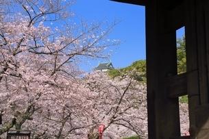 和歌山城天守閣とサクラの写真素材 [FYI01816965]