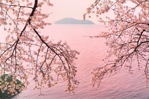 海津大崎のサクラの写真素材 [FYI01816968]
