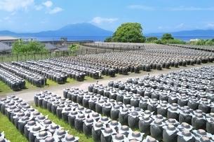 桜島と黒酢の壺畑の写真素材 [FYI01817011]