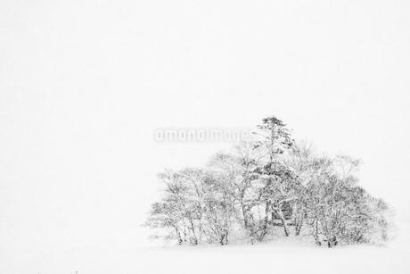 雪の大沼公園の写真素材 [FYI01817021]