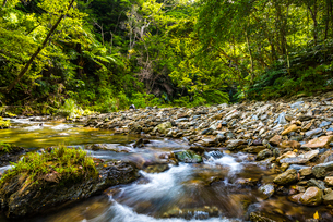 やんばるの川の写真素材 [FYI01817039]