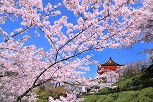 清水寺の仁王門とサクラの写真素材 [FYI01817052]