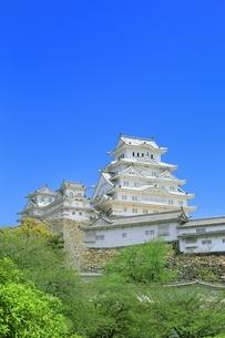 新緑の姫路城天守閣の写真素材 [FYI01817121]