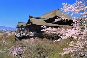 清水寺とサクラの写真素材 [FYI01817219]