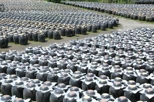 黒酢の壺畑の写真素材 [FYI01817228]
