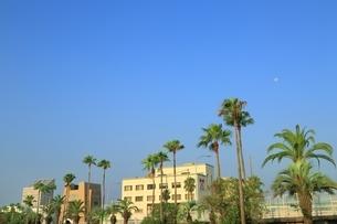 海岸通りのパームツリーに月の写真素材 [FYI01817290]