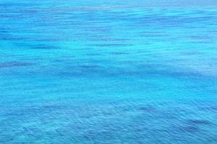 サンゴ礁の海の写真素材 [FYI01817336]