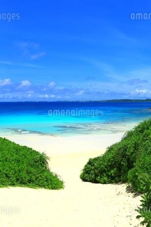 砂山ビーチと青い海の写真素材 [FYI01817368]
