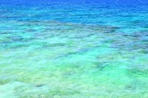 サンゴ礁の海の写真素材 [FYI01817370]