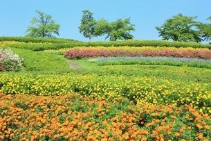 馬見丘陵公園 夏の花々の写真素材 [FYI01817384]