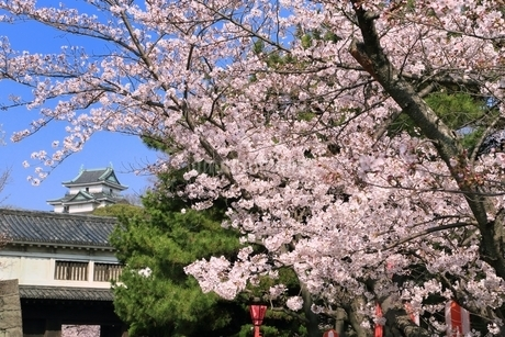 和歌山城天守閣とサクラの写真素材 [FYI01817396]