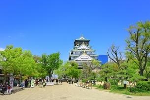 新緑の大阪城天守閣の写真素材 [FYI01817401]