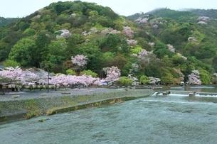 雨の嵐山公園・サクラと保津川の写真素材 [FYI01817417]