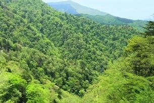 新緑の大台ケ原の写真素材 [FYI01817441]