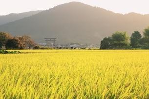 山の辺の道 三輪山の朝 の写真素材 [FYI01817448]
