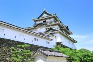 新緑の和歌山城の写真素材 [FYI01817475]