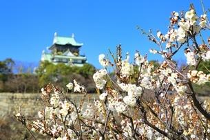 大阪城と梅林の写真素材 [FYI01817531]