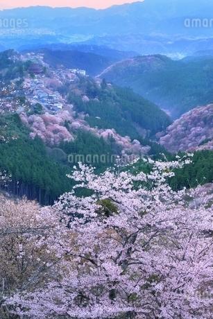 吉野山のサクラの写真素材 [FYI01817573]