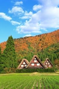 秋の白川郷の写真素材 [FYI01817580]