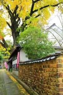 有田の大公孫樹の写真素材 [FYI01817632]