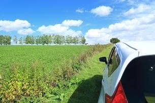 セブンスターの木と車の写真素材 [FYI01817653]