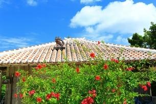 竹富島 赤瓦屋根の民家とシーサーにブーゲンビリアの写真素材 [FYI01817673]