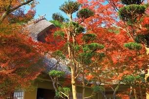 秋の九年庵の写真素材 [FYI01817686]