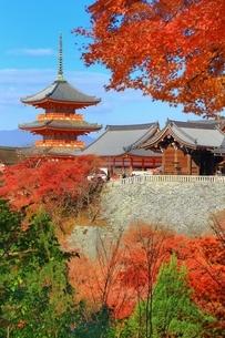 清水寺の紅葉の写真素材 [FYI01817724]