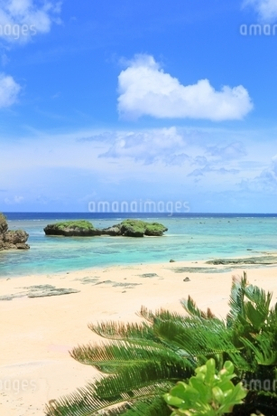沖縄 西表島 星砂の浜の写真素材 [FYI01817738]