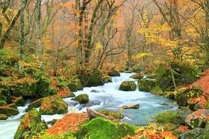 秋の奥入瀬渓流 阿修羅の流れの写真素材 [FYI01817771]