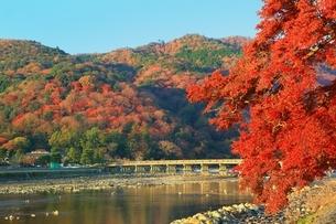 紅葉の嵐山に渡月橋の写真素材 [FYI01817783]