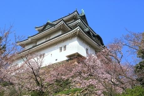 和歌山城天守閣とサクラの写真素材 [FYI01817840]