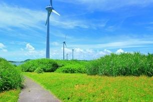 西平安名崎の風車とテンニンギクの花の写真素材 [FYI01817902]