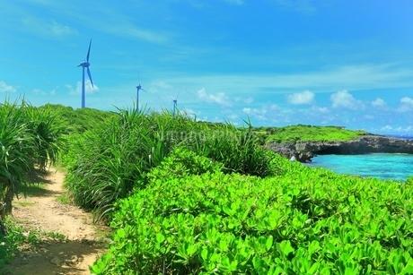 西平安名崎と風車の写真素材 [FYI01817930]