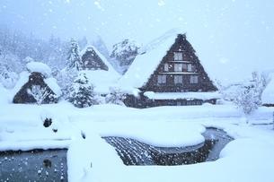 降雪の白川郷の写真素材 [FYI01818037]