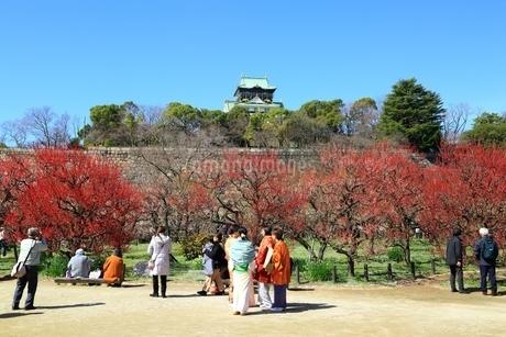 大阪城公園の梅林と花見客の写真素材 [FYI01818062]