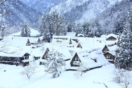 五箇山 雪の相倉合掌集落の写真素材 [FYI01818124]