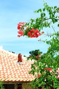 竹富島 赤瓦屋根とシーサーにブーゲンビリアの写真素材 [FYI01818125]