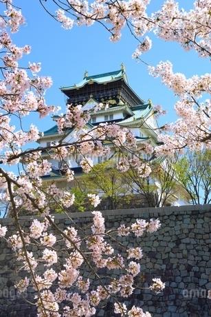 大阪城天守閣と桜の写真素材 [FYI01818141]