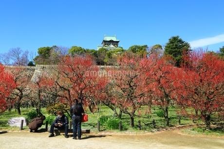 大阪城公園の梅林と花見客の写真素材 [FYI01818186]