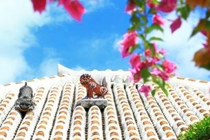 竹富島 赤瓦屋根とシーサーにブーゲンビリアの写真素材 [FYI01818206]