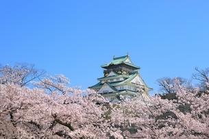 大阪城天守閣と桜の写真素材 [FYI01818280]