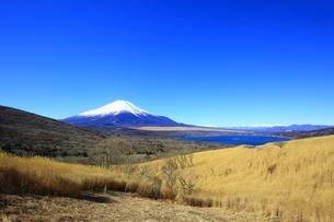 パノラマ台より望む富士山の写真素材 [FYI01818289]