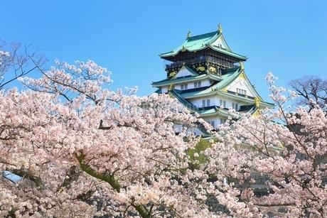 桜咲く西の丸庭園からの大阪城天守閣の写真素材 [FYI01818343]