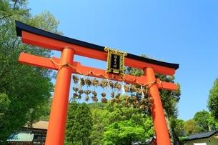 松尾大社 赤鳥居と脇勧請の写真素材 [FYI01818348]