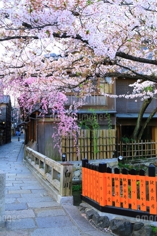 桜咲く祇園白川の写真素材 [FYI01818350]