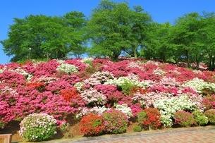 ツツジ咲く西山公園の写真素材 [FYI01818375]