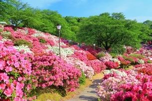 ツツジ咲く西山公園の写真素材 [FYI01818383]