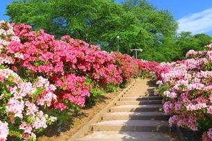 ツツジ咲く西山公園の写真素材 [FYI01818457]