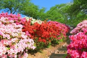 ツツジ咲く西山公園の写真素材 [FYI01818483]